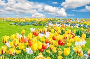Весна. День восьмой
