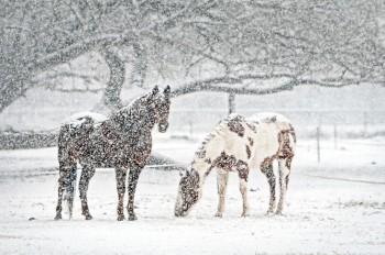 Синоптики: на Чехию надвигается сильный снегопад