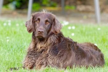 Пражан необычным способом призвали убирать за своими собаками