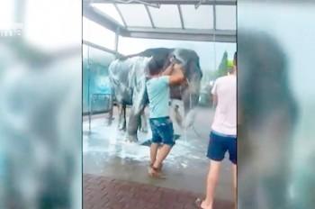 Работники чешского цирка искупали слона на автомойке: видео