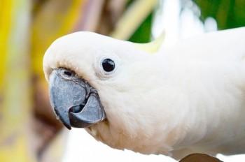 Соседи приняли перепалку с попугаем за семейный скандал и вызвали полицию