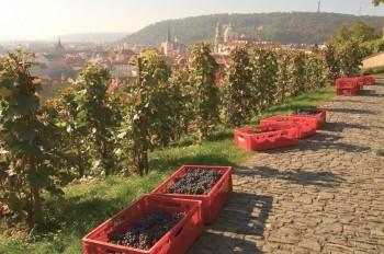В Чехии продолжаются поиски губительной для урожая бактерии