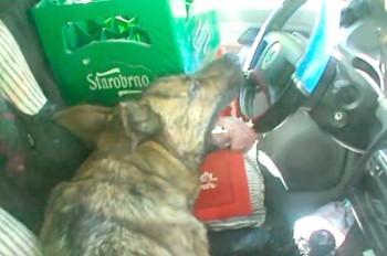 В Праге полицейские спасли собак из раскаленного на солнце авто: видео