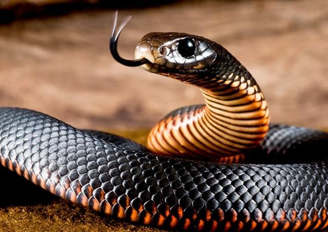 В чешском магазине Kaufland ищут змею