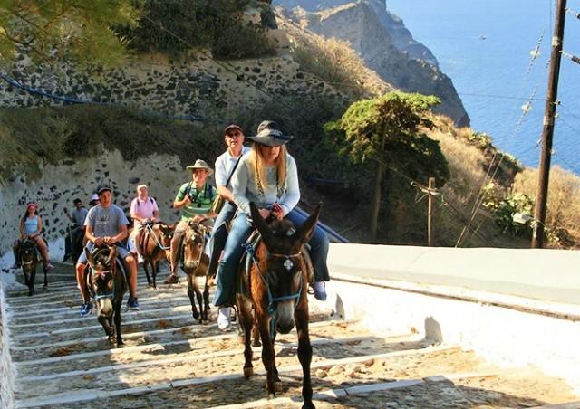 Власти Греции защитили ослов Санторини от толстых туристов