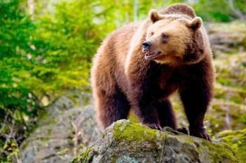 В Чехии туристы приняли оленя за медведя и забрались на дерево